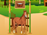 Horse Care Apprentic