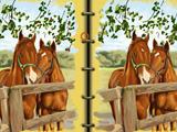 Horses Art Book