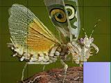 Sweet butterfly slide
