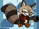 Raccoon adventure